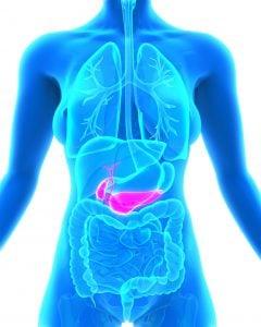 Bauchspeicheldrüse produziert Insulin