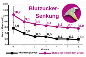 Hintonia senkt den Blutzucker nach 6 Monaten von 7,9 bis 6, mml/l